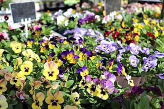 プチフルールと季節のお花